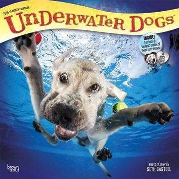 Underwater Dogs Wall Calendar, Funny Dogs by BrownTrout