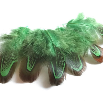Natural Feathers | Ringneck Pheasant Church Windows| Earrings feathers | Millinery Jewelry Crafts supplies| Hair accessories Green FA46