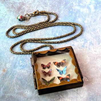 Butterfly Shadowbox Collection Locket Necklace..Natural History Jewelry