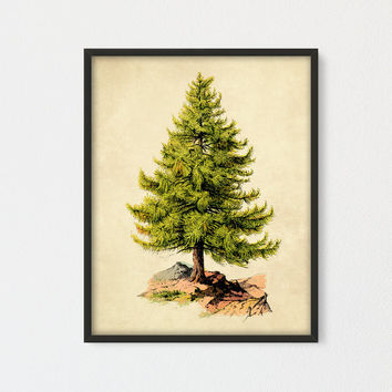 Pine Tree Printable, Botanical Art Print, An Appeal to God Vintage Wall Art, Botanical Tree Print, Tree Illustration, Vintage Pine Tree Art