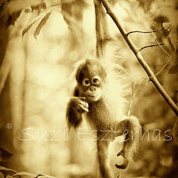 Vintage JUNGLE BABY ANIMALS - Set of Three  Sepia Photo Prints 8 X 10 - Orangutan, Gorilla, Chimpanzee, Wildlife Photography, Nursery Art