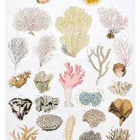 Sea Anemone Tea Towel