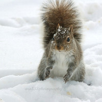 "CIJ SALE, Winter Squirrel Photography - 5x5 inch Print - ""Making Snowballs"