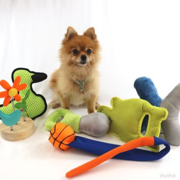 Squeaky Dog Toy Set