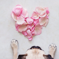 Pug Photo - Rose Petal Heart Photo - Fine Art Photography, Pastel Pink, Valentine's Day Gift, Cottage Chic Decor, Romantic Wall Art.