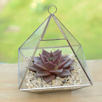 Geometric Glass Vase Succulent Terrarium Kit