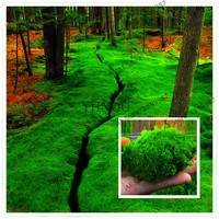 100Pcs bonsai Moss Seeds, green plant,Decorative Grass Seeds,Potted Plant For DIY Home