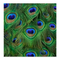 Peacock Feathers Shower Curtain> Shower Curtains > Scarebaby Design