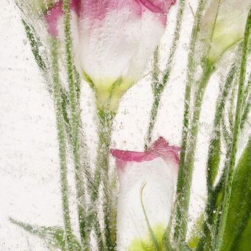 """Fine Art Flowers Photography """"SPRING TIME"""". Limited Edition Botanical Floral Art Print Under Acrylic TableTop Decor ArtWork Gift"""