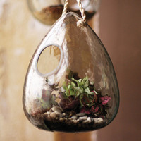 Dew Drop Hanging Glass Terrarium
