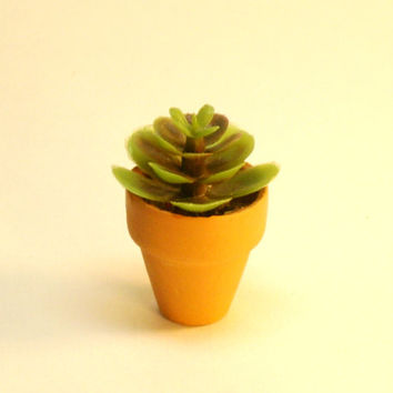 Miniature Plant for Fairy Garden Dollhouse Succulent in Clay Pot