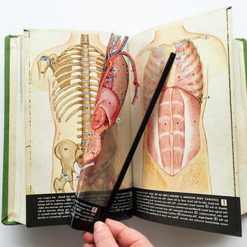 Vintage Mid Century Modern Biology Book / Human Anatomy / Hardcover / Green Decorative Decor / Paper Ephemera / Great Gift