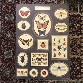 Natural History Butterflies and Insects Print