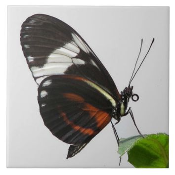 Longwing Butterfly Photo Tile