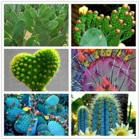 300 Pieces/Bag Best-Selling!!Succulent Cactus Seeds Bonsai Potted Plants Home Gardening Flower Pots Balcony flower seeds