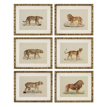 Animal Print | Eichholtz Lion, Tigre, Jaguar set of 6