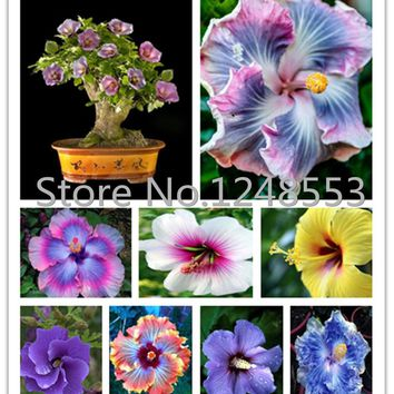 1000PC Giant Hibiscus Flower Seeds Hardy , 24 kinds, 24 Colors, DIY Home Garden potted or yard flower plant,bonsai flowers