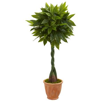 5' Money Artificial Tree in Terracotta Planter (Real Touch)