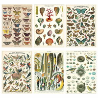 French Nature Vintage Style Poster Set of 6