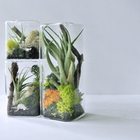 Set of 3 Air Colors Air Cube Terrarium Small, Medium, Large  ( NOW LARGER SIZES )  - Air Plant, Tillandsia, Living Home Decor, Gift ,  Cube