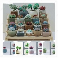 50 Pcs/Bag Rare Mini Beauty Succulents Seed Mixed Stone Flower Seeds Lithops Pseudotruncatella Seed Office Desktop Flowers Plant