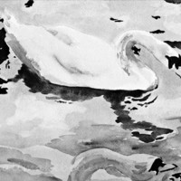 Watercolor Painting Print Black and White Art Print Swans Watercolor 5x7