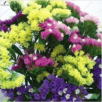 Statice Seeds (Limonium Sinuatum) 7colors mixed Statice flower seeds! Perennial Excellent as Cut or Dried Bouquets30seeds/bag