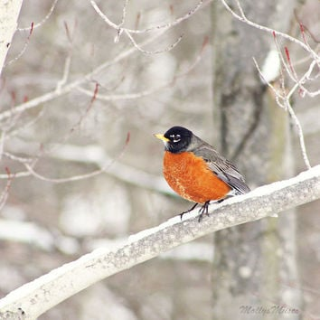 Robin Picture, Robin Photograph, Woodland Decor, Home Decor, Forest, Bird Art, White, Nature Photography