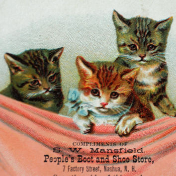 1800s Trade Card ~ Adorable Kittens for Manfsfield's Nashua NH,  Scrapbooking, Collage, Altered Art, Mixed Media #158