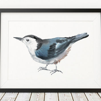 White breasted nuthatch print Bird watercolor Cute nursery art ACW134