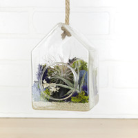Air Plant Birdhouse Air Plant Kit