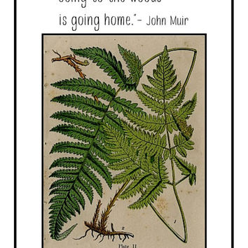 Botanical print, printable, download, vintage fern wall art, John Muir quote, art prints, nature wall art, bedroom decor, home office print