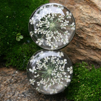 Real Flower Plugs Queen Annes Lace in Resin for gauged ears custom size 9/16g, 5/8g, 3/4g, 14mm, 16mm, 19mm