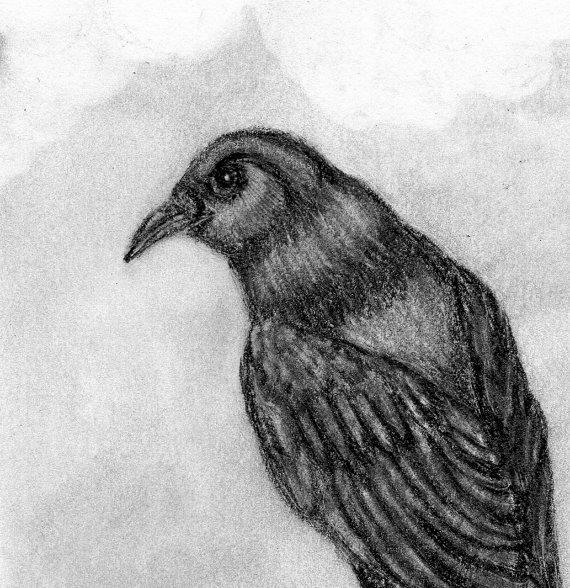 Black Crow Drawing - Original Pencil Drawing - Bird Sketch - Halloween Decor