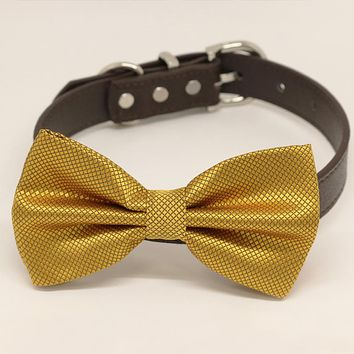 Gold bow tie attached to leather dog collar, Chic Dog Bow tie, Pet Wedding Accessories