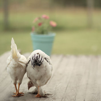 Two White Hens on the Porch French Country
