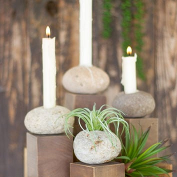 River Stone Air Plant Holder On A Wooden Base