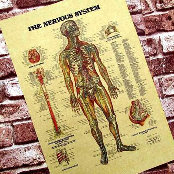 Wall Sticker posters for walls Human Neural Figure In English Classroom Decoration Medical Hangs A Picture Kraft Paper Poster