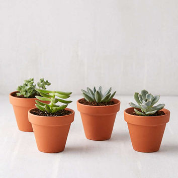 Mini Terracotta Pot - Set of 4 | Urban Outfitters