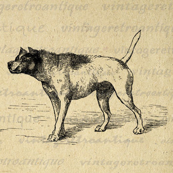 Digital Printable Dog Download Antique Image Graphic Vintage Clip Art for Transfers Printing etc HQ 300dpi No.102