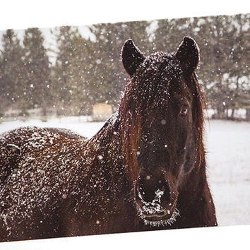 Black Horse, Horse Lover, Photo Greeting Card, Birthday, Anniversary, Friendship, Thinking of You, Christmas, Good Luck, Invitation, Fun