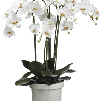 Lifelike Large White Phalaenopsis Orchid Plant In Decorative Container