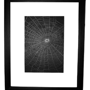 Preserved Spider Web Created by the Orchard Spider Orb Weaver