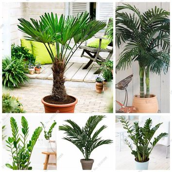 Happy Farm 5 Pcs / Bag Palm Seeds Indoor Ornamental Plants Evergreen Tree Seeds Shrub Plants Seeds Of Perennial Garden Flowers