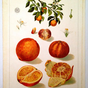 Orange Art Print  Botany Print by CasaAndCo on Etsy