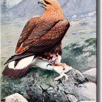 Golden Eagle Catching Pray Picture on Acrylic , Wall Art Decor, Ready to Hang!