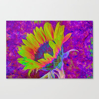 Sunflower Summer Stretched Canvas by Paul & Fe Photography