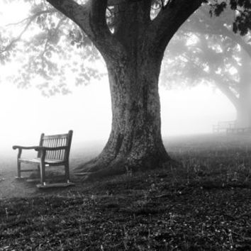 Trees and bench in fog, Shenandoah National Park, Virginia.  - Nature Fine Art Print or Gallery Wrap Canvas