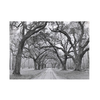 Natural Arches Canvas Print
