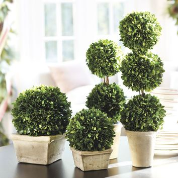 Southern Living Preserved Boxwood Topiary